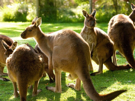 Currumbin Wildlife Sanctuary in Australia