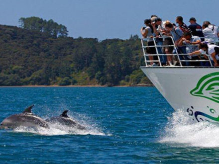 Dolphin cruise Tours Packages Australia